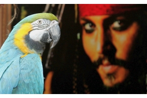 ジョニー・デップさん、海賊船を1400万円で貸し出す