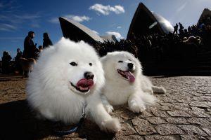 世界初の犬のためのコンサート開催