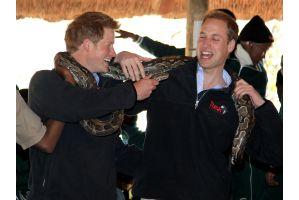 英ウィリアム、ヘンリー両王子が大蛇を初体験