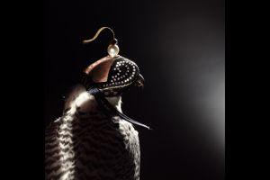 UAE大富豪の新ステータスシンボル「鷹の冠」