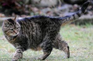 人間にして172歳、世界最高齢の猫がいた(英)