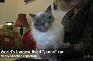 2つの顔を持つ「双頭猫」が12歳でギネスに