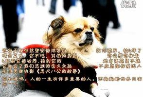 中国版「忠犬ハチ公」4年間主人を待ち続ける犬