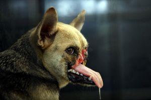 顔を半分失った「英雄犬」が子犬出産