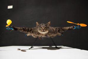 生まれ変わって「空飛ぶ猫」に