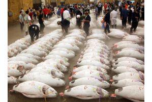 1.5億円マグロ漁師が長者番付入りへ