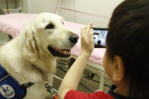 難病と闘う子供たちを支える犬の育成に寄付【読者特典つき】