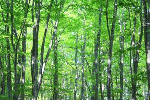 機関投資家が注目する森林ファンドとは何か